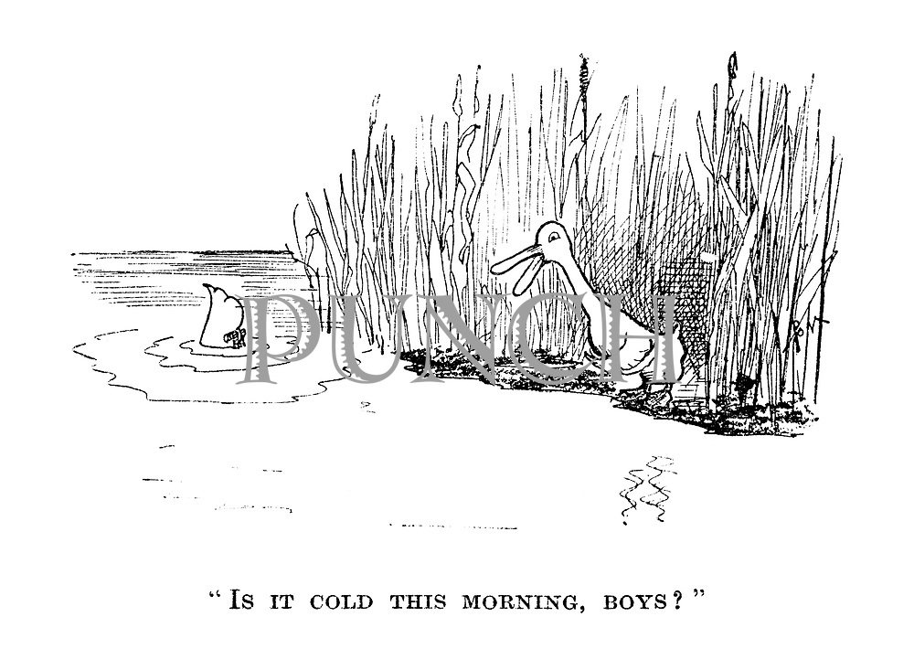"""""""Is it cold this morning, boys?"""""""
