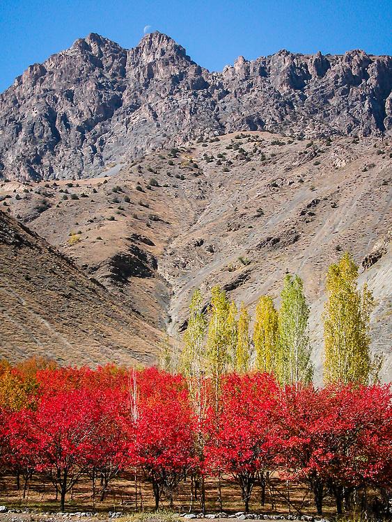Stock photograph of crop trees in autumn beneath a mountain range in western Tajikistan