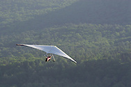 Ellenville, NY - A man flying a hang glider soars above a forest on May 30, 2009.