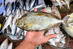 Fishmonger holding small fish for sale at Dubai fish market in Deira United Arab Emirates