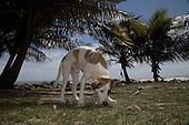 Dead Dog Beach Puerto Rico