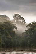 Landscape with a rainforest in fog on the bank of the San Juan River, El Castillo, Rio San Juan Department, Nicaragua