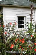 65821-00215 Cosmos and Globe Amaranth Montrose Gardens Hillsborough, NC