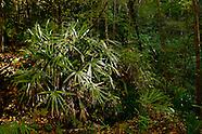 Devil's Millhopper, Gainesville Florida