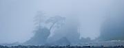 Sea stacks topped with trees near Bonilla Point, West Coast Trail, British Columbia, Canada.