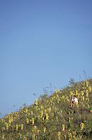 Hombre sentado sobre la cima del tepuy Autana, Amazonas, Venezuela.