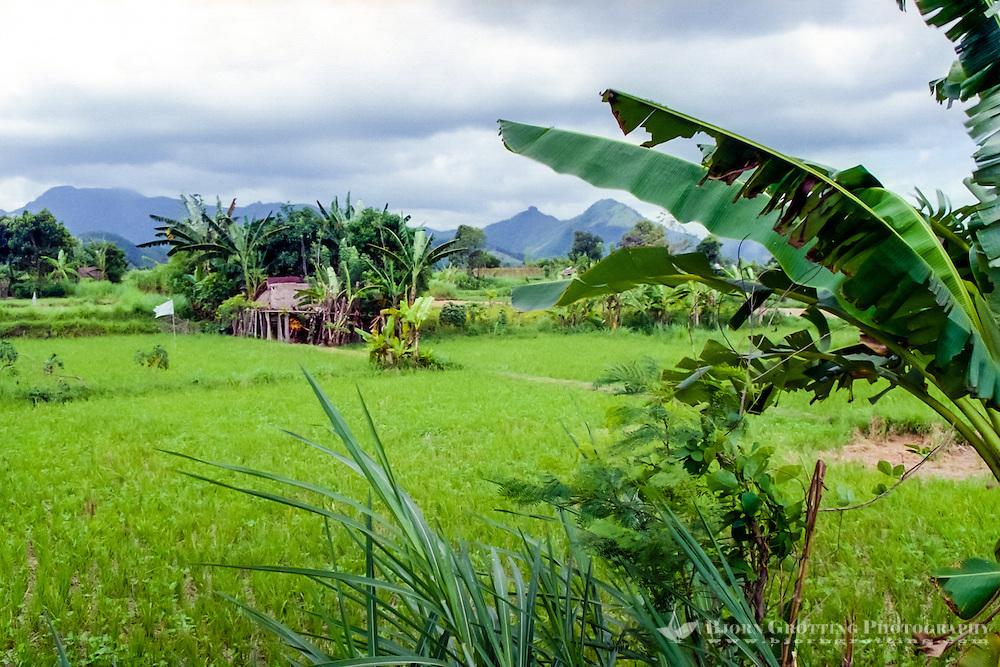 Bali, Klungkung, Semarapura. The landscape east of Semarapura towards Goa Lawah changes to rice fields and green hills stretching up to Gunung Agung.