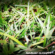anubhav clickz