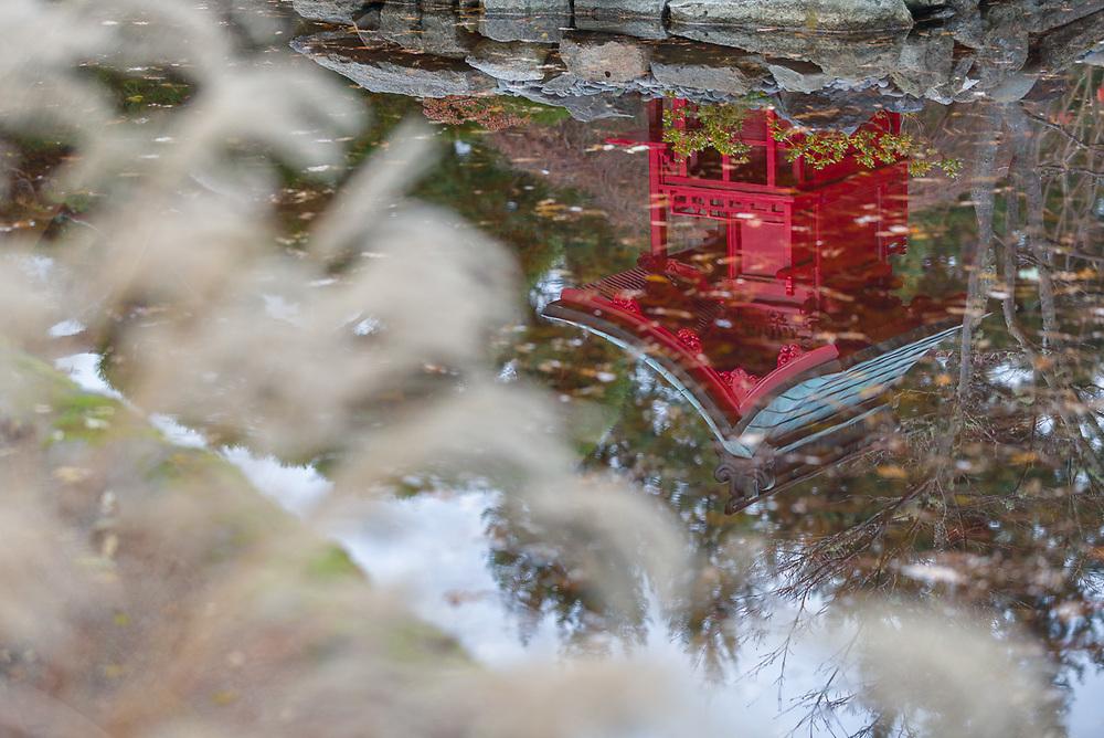 Japanese Garden, autumn, November, Point Defiance Park, Tacoma, Washington, USA