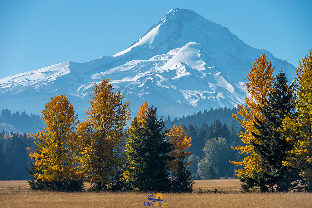 Mount Hood covered in snow from Laurance Lake Dr.