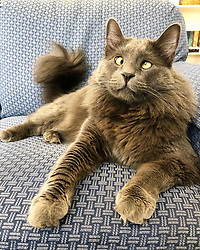 """*VIDEO AVAILABLE: info@cover-images.com*<br /> <br /> A cross-eyed rescue cat is using his unusual looks to raise thousands of dollars for charity. <br /> <br /> Belarus has been blighted with a 'confused' expression thanks to a condition called strabismus. <br /> <br /> He lives in San Francisco with owner Rachel Krall, who adopted him from a shelter after seeing him online. <br /> <br /> He was surrendered to San Francisco Animal Care & Control (SFACC) by his previous family, due to landlord issues <br /> <br /> Rachel explains: """"He is a very active and extremely curious cat.  He loves to play with balls, twist ties, and almost any other small object he can get his paws on.  He seems highly intelligent and doesn't let his wonky eyes slow him down."""" <br /> <br /> """"Dr Travis Strong partnered with us to share more about strabismus, which is the medical term for the eye condition he has. It just means that the muscles that hold his eyes in place may have an abnormal position or may be damaged, causing the gaze to be displaced.  This condition doesn't cause pain and hasn't impacted his day-to-day. <br /> <br /> """"Since his adoption, we have raised and donated $1000's to animal charities to help other animals in need through his online presence.  In 2019, we partnered with Friends of SFACC, Cat Town of Oakland, and Sonoma Community Animal Response Team."""" <br /> <br /> Belarus merchandise:  http://www.belarusthecat.com/merchandise/<br /> <br /> Where: San Francisco, United States<br /> When: 30 Mar 2019<br /> Credit: my_boy_belarus/Cover Images<br /> <br /> **MANDATORY CREDIT: Rachel Krall/Cover Images. Only for use in this story. Editorial Use Only. No stock, books, advertising or merchandising without photographer's permission**"""