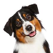20140904 Judi Happy Dog Head Shots