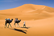 Elhussein Sbiti leads two camels through the desert on a three-day camel trek to the remote dunes of Erg Zehar, near M'hamid in the Moroccan Sahara. Sbiti, like many berber nomads in the region, has found opportunity in the new tourism trade burgeoning since the settling of tensions between Morocco and neighboring Algeria.