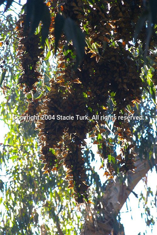 Copyright Stacie Turk 2004. All rights reserved.