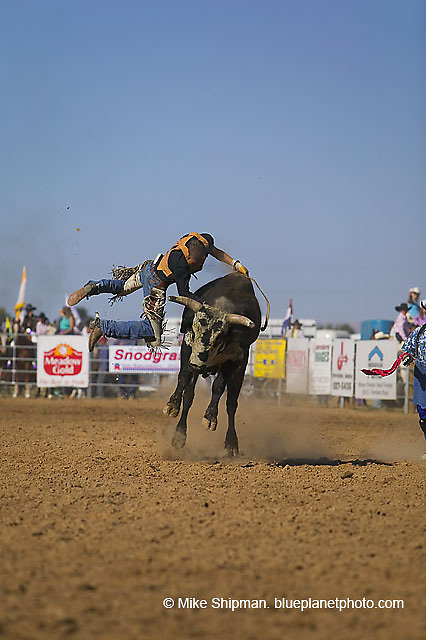 A bullrider gets tossed at the Meridian Lions Rodeo