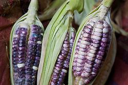 Purple corn displayed in market, Cuzco, Peru, South America