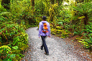 Hiker on the trail to The Chasm, Fiordland National Park, South Island, New Zealand