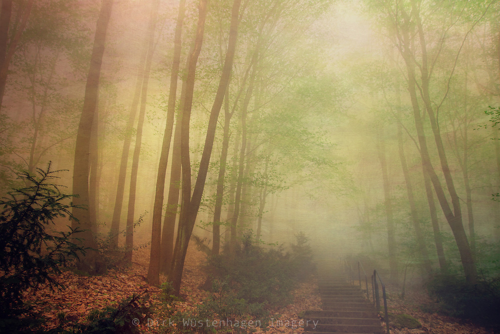 Spring forest in morning light and fog.<br /> Texturized photograph.<br /> Prints: http://society6.com/product/mellow-morning_Print