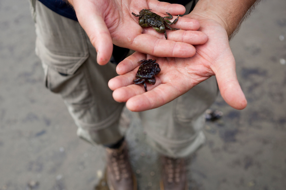 Henry holds two small crabs found in a tide pool, West Coast Trail, British Columbia, Canada.