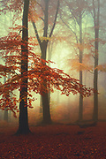 Fog, sun and autumn colours creating a great atmosphere on a misty November morning