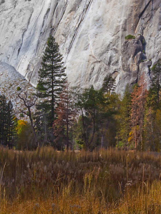the granite rock face of el capitan stand as the perfect backdrop to the softness of the trees changing into their fall clothes