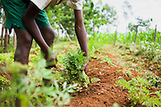 African students practice sustainable gardening and agriculture at Kuna Primary School in North Kamagambo, Kenya.