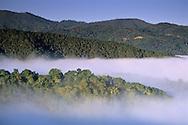 Coastal fog, oak trees, and hills, Cachaqua Road, above Carmel Valley, Monterey County, California