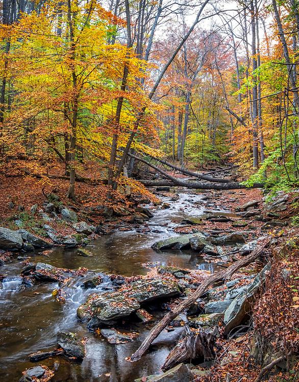 Fall Foliage Thurmont MD Autumn Fall Color