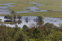 Flooded area in the Northern part of the Livansko Polje -  karst plateau: arguably the largest karst field in the world. Ramsar site. A roof of a house and an electric line is in the vegetation. An area affected by war (1991-1995) and a place with mine fields. Kazanc area. Flooded white willow (Salix alba).  May 2009. Bosnia-Herzegovina.<br /> Elio della Ferrera / Wild Wonders of Europe