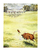(A fox, having evaded the hunt, is chased by a bull back towards the hunters)