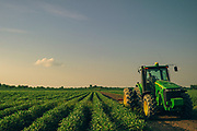 10162247A DYESS, Ark. - Aug. 11, 2014 - Ricky Roach, mans a tractor while mowing along the edges of the soy bean fields in Dyess, Ark. CREDIT William DeShazer for the New York Times