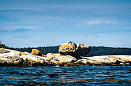 Big rock balanced atop a rock ledge in Penobscot Bay, in Maine. A sunny day wiith blue skies and blue waters, seaweed foating in the water.