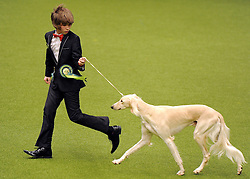 © Licensed to London News Pictures. 11/03/2012. Saluki Jorjenjo Mirzam and her young owner Mr Steer go for a walk around the ring before picking up third in the Best of Breed in the Hound Group of the Crufts final at the Birmingham NEC Arena.   Photo credit: Alison Baskerville/LNP