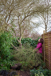 Inspecting storm damage and clearing away fallen branches