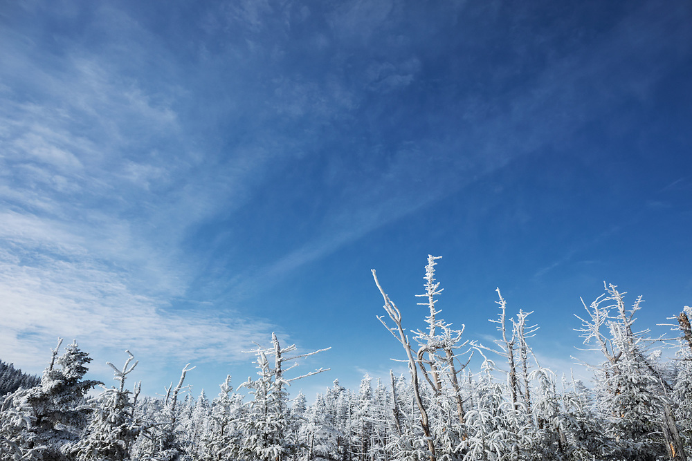 Frozen tree tops on the trail to Gothics Mountain on a blue bird day