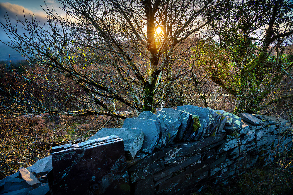 I've always been fascinated by the way nature reclaims so much of what man has altered, constructed or destroyed. Here at the Dinorwic slate quarries, wonderful little copses and patches of woodland have sprung up between the walls, railway tracks and buildings that were part of this huge slate industry. <br /><br />On a warm evening with only the sound of a Blackbird's song to lighten the sounds of or heavy footsteps, it was hard to imagine the noise and industry from just a few decades earlier, as man blasted into mountain.