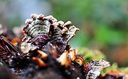 500px Photo ID: 4499948 - abstract macro of fungus colony