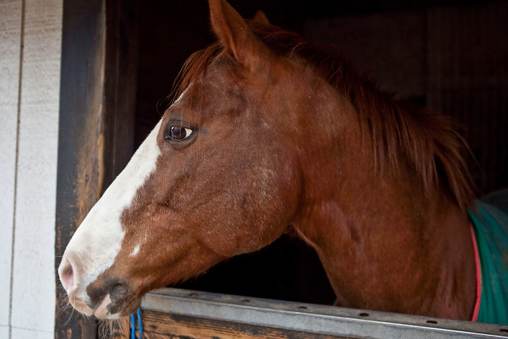 Horse photos, horses