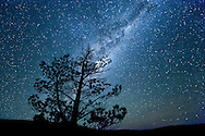 Tree silhouetted against the Milky Way in Sutherland, South Africa.