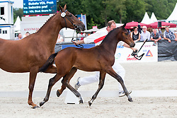 023 - Harteveld VDL<br /> KWPN Paardendagen - Ermelo 2012<br /> © Dirk Caremans