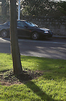 Car travelling along the road past  tree in grass verge in Dublin Ireland