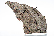 bark of a tree piece
