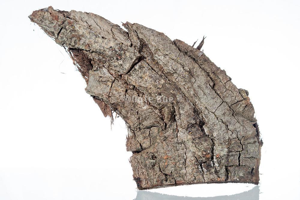 bark of a tree piece