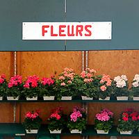Europe, France, Paris. Fleurs in the Marche aux fleurs, Paris.