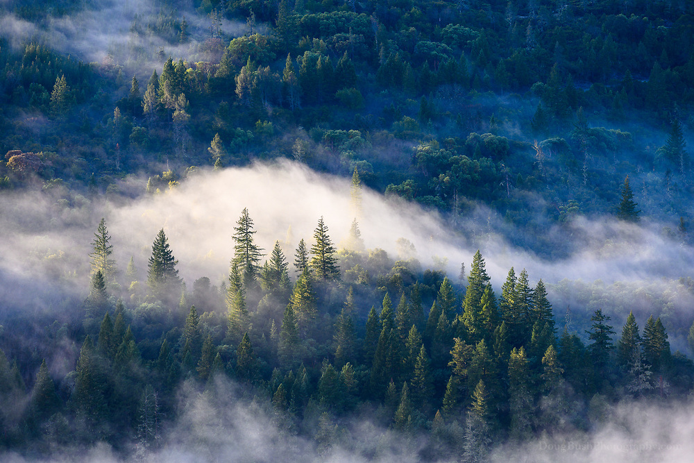 """Low level clouds and fog are one of the core elements of the Mendocino National Forest, which is why they show up in many of my photographs. Clyde Butcher, a renowned landscape photographer in Florida once told me, """"In California you have mountains, in Florida we have clouds."""" In this area, they are often one and the same."""