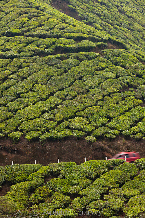 A car drives on a road cutting through the tea plantations in Munnar, a hill station in Kerala, India