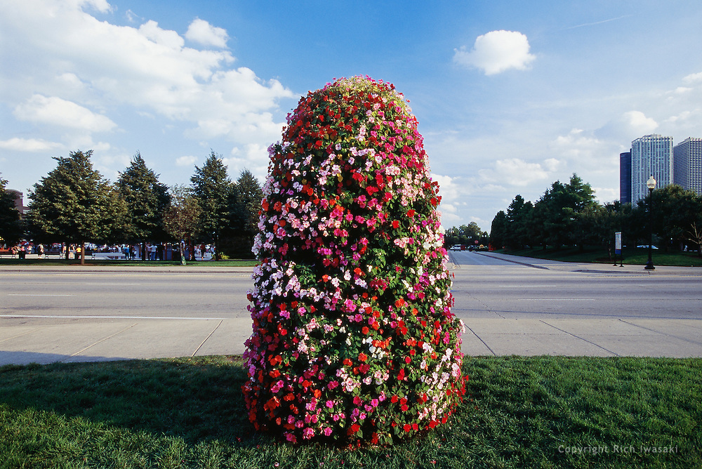 Display of impatien flowers near Navy Pier, Chicago, Illinois