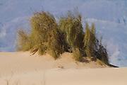 Sands of Samar, also called the Samar sands or Samar sand dunes, are an expanse of sand dunes in the Arava region of southern Israel