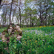 The Morton Arboretum, in Lisle, Illinois, covers 1,700 acres and is made up of gardens of various plant types. The Arboretum has over 4,100 different species of trees, shrubs and other woody plants from around the globe. In all, there are over 186,000 catalogued plants.