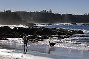 Nobbys Beach, Port Macquarie, a local dog friendly beach.